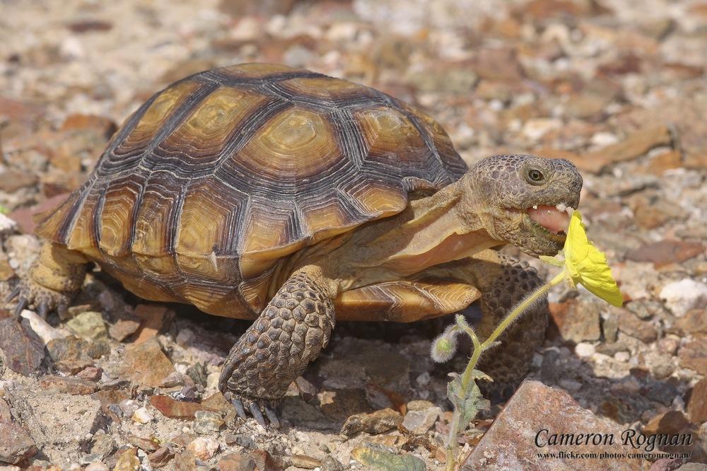 Landslide – Bonfire & Rosalind Peterson on Desert Tortoises